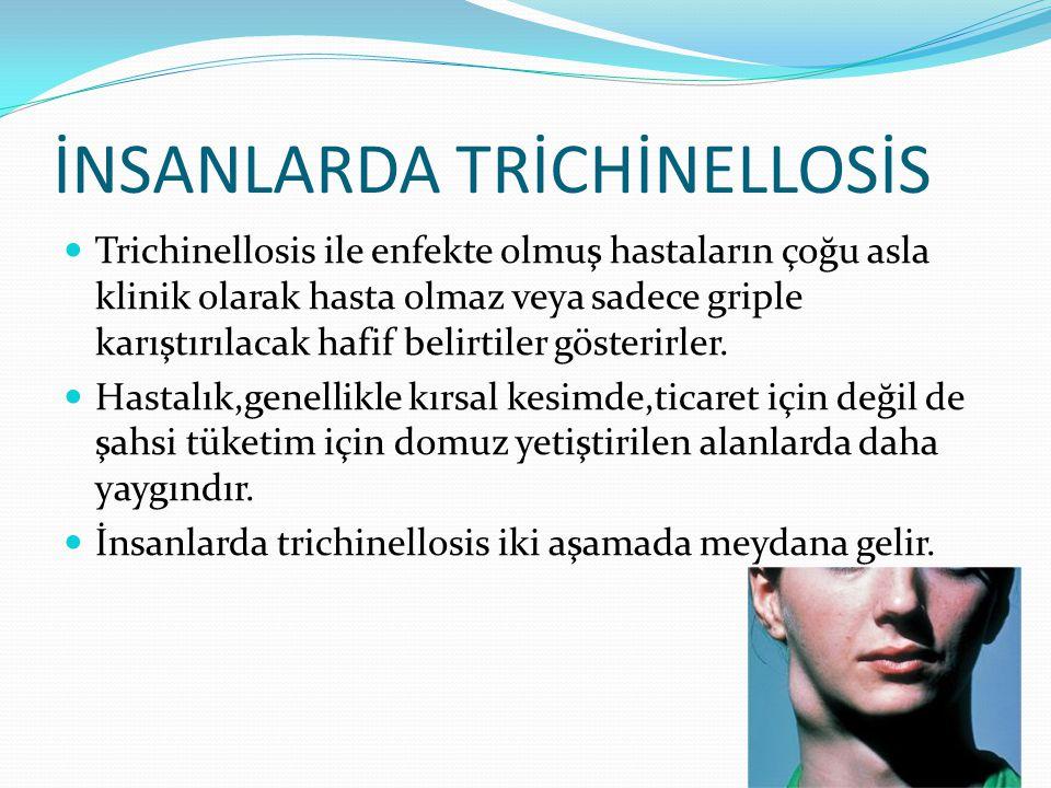 İNSANLARDA TRİCHİNELLOSİS