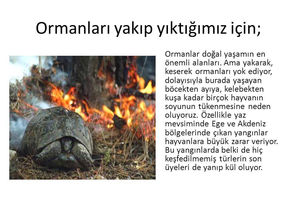 Ormanları yakıp yıktığımız için;