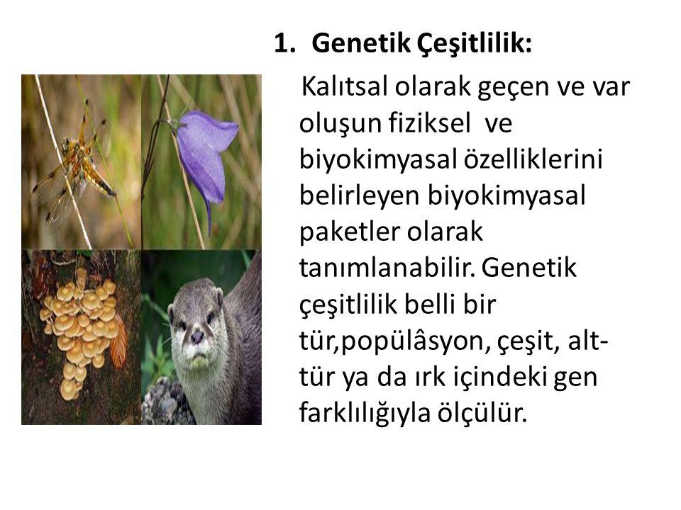 Genetik Çeşitlilik: