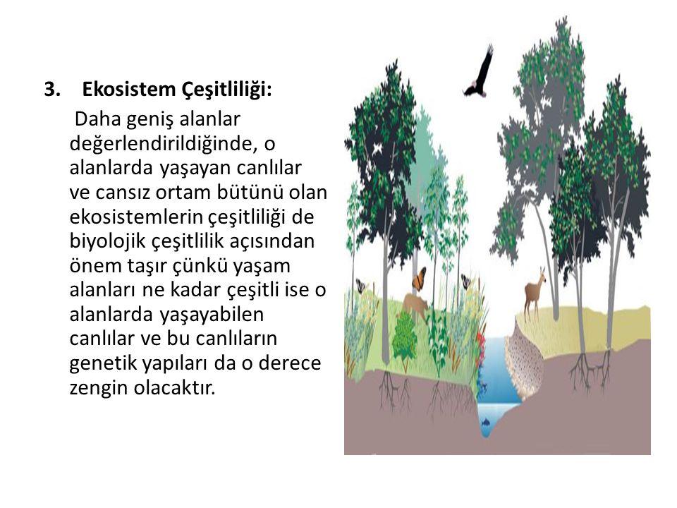 Ekosistem Çeşitliliği: