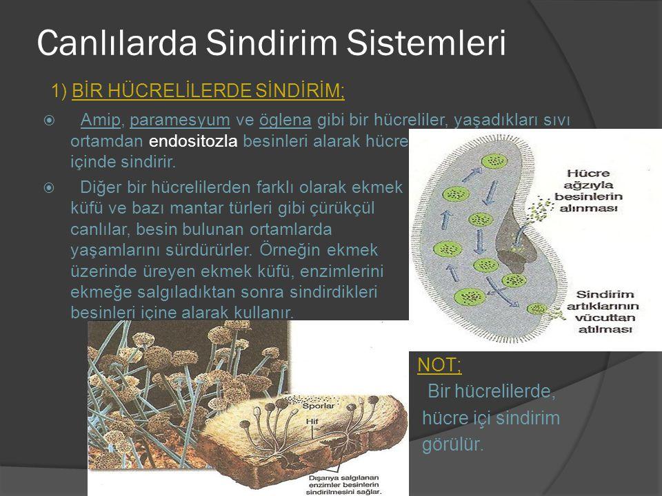 Canlılarda Sindirim Sistemleri