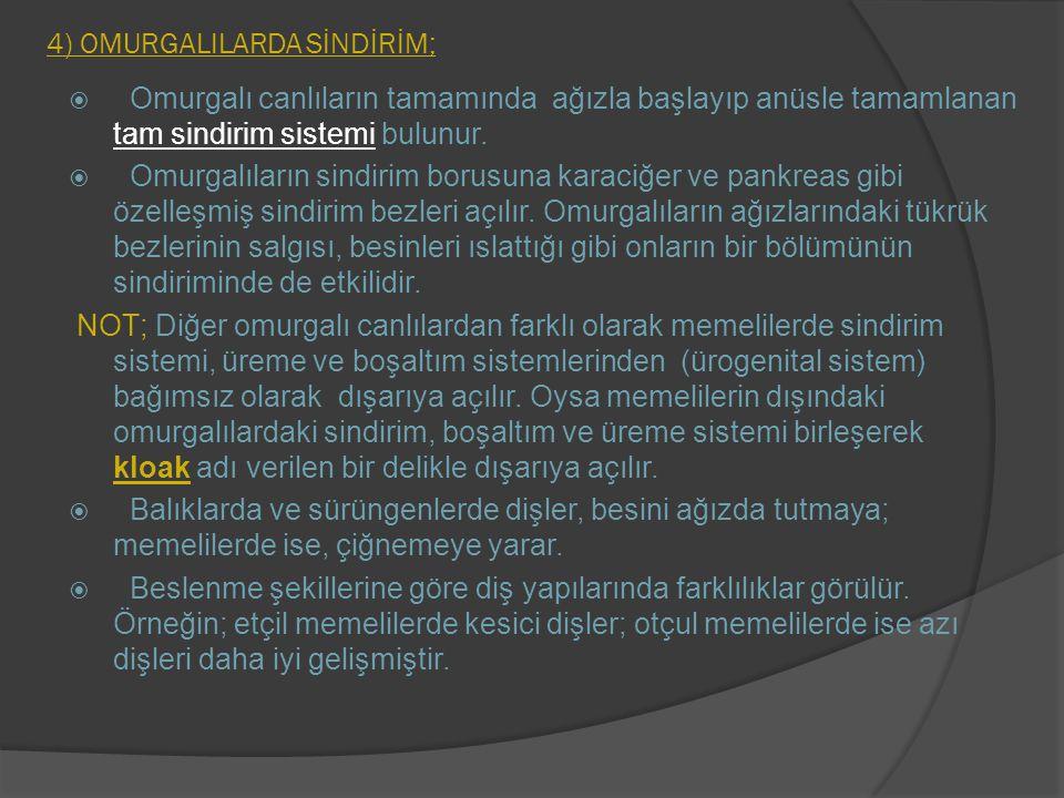 4) OMURGALILARDA SİNDİRİM;