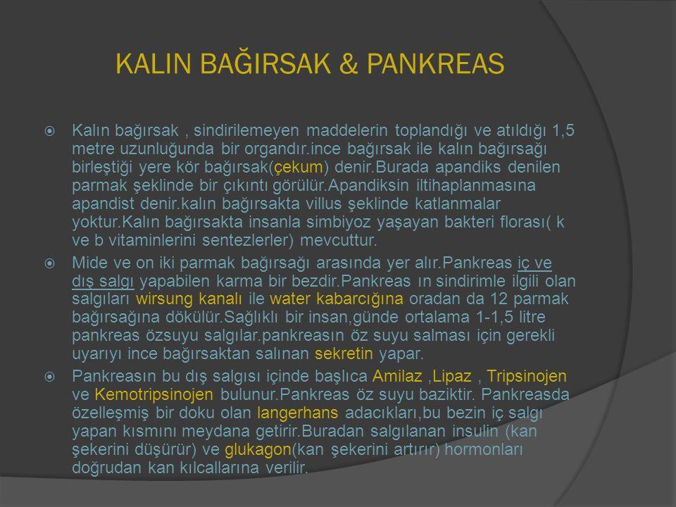 KALIN BAĞIRSAK & PANKREAS