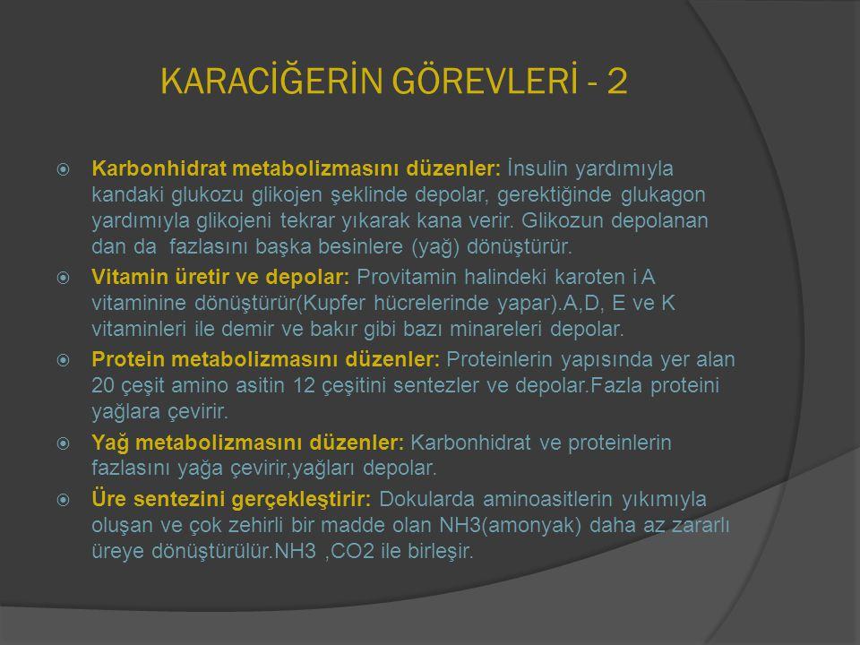 KARACİĞERİN GÖREVLERİ - 2