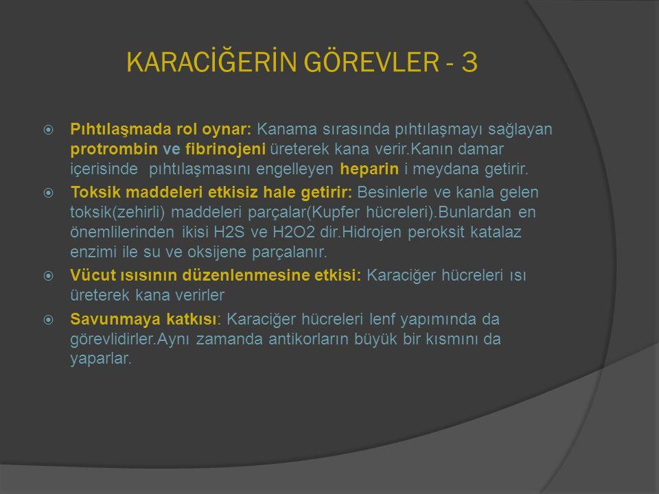 KARACİĞERİN GÖREVLER - 3