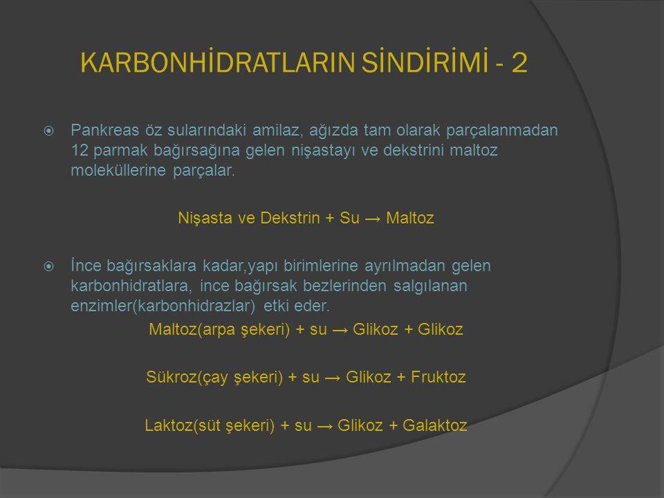 KARBONHİDRATLARIN SİNDİRİMİ - 2