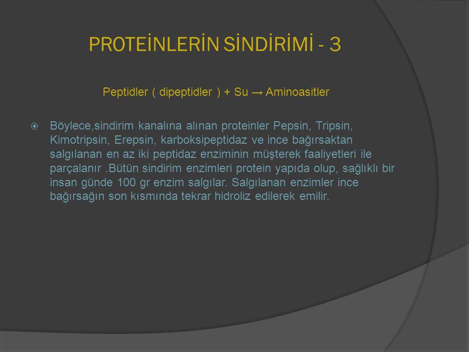 PROTEİNLERİN SİNDİRİMİ - 3