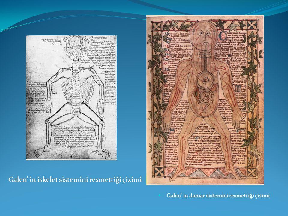 Galen' in iskelet sistemini resmettiği çizimi