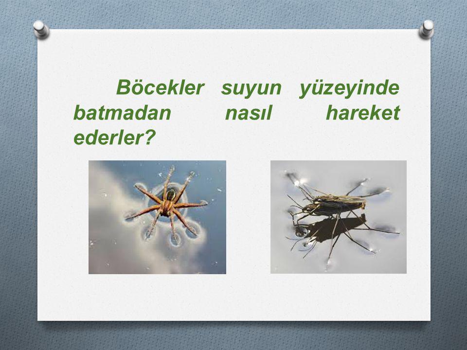 Böcekler suyun yüzeyinde batmadan nasıl hareket ederler