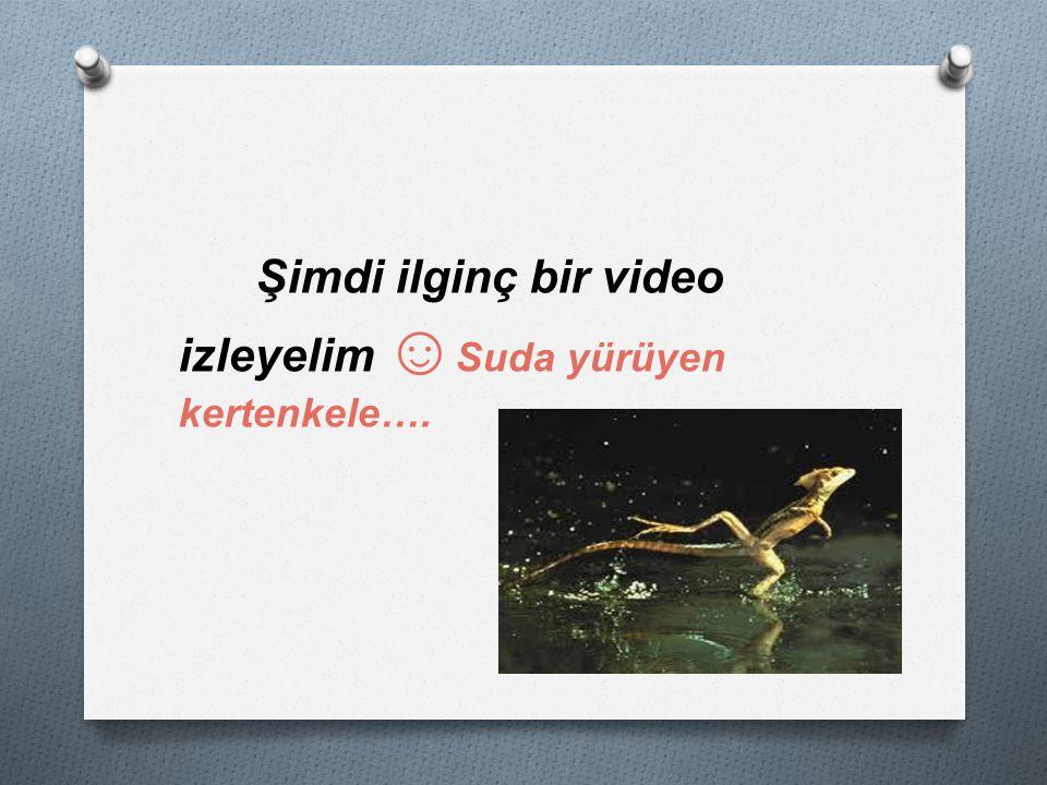 Şimdi ilginç bir video izleyelim ☺Suda yürüyen kertenkele….
