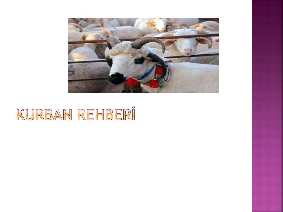 KURBAN REHBERİ