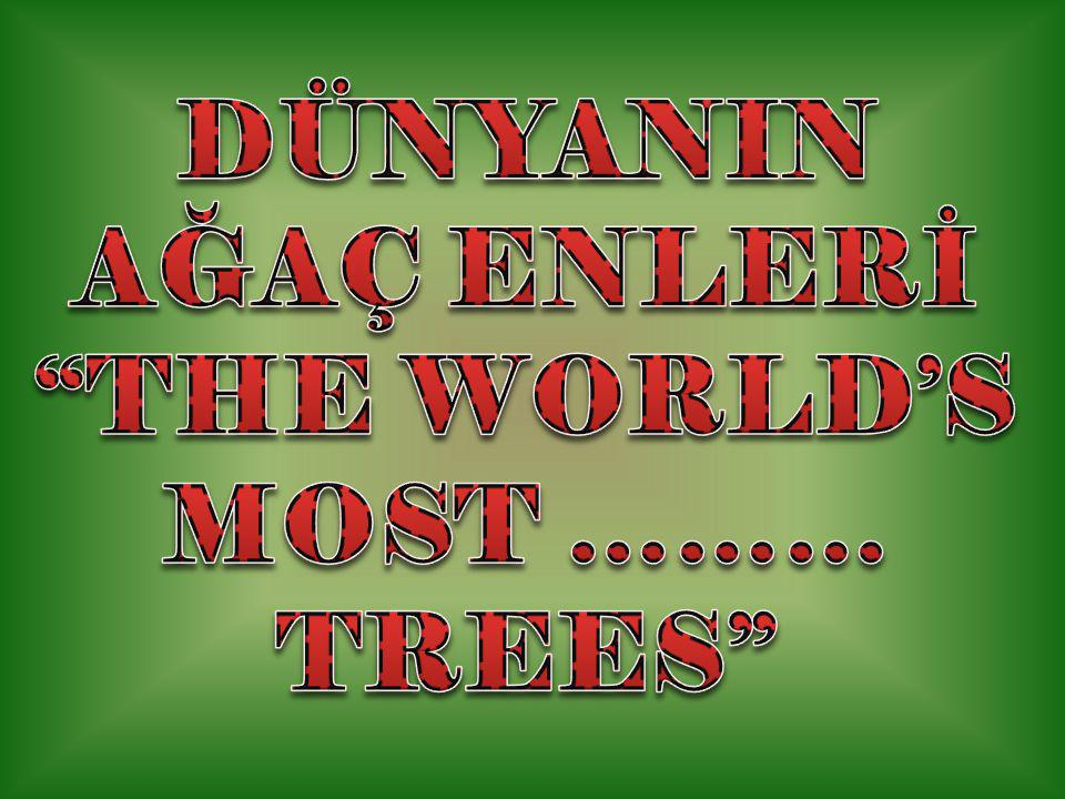 DÜNYANIN AĞAÇ ENLERİ THE WORLD'S MOST ……… TREES