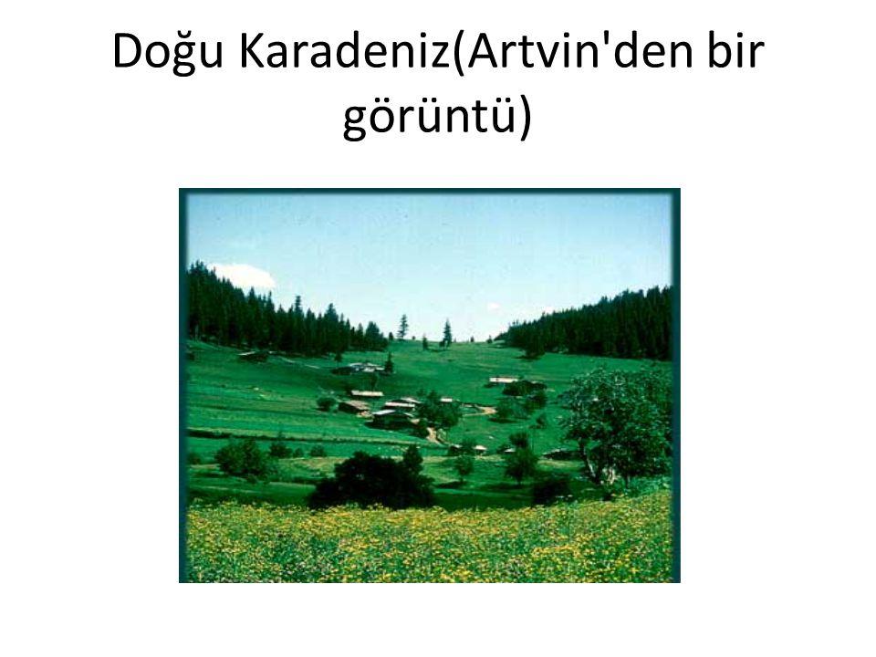 Doğu Karadeniz(Artvin den bir görüntü)
