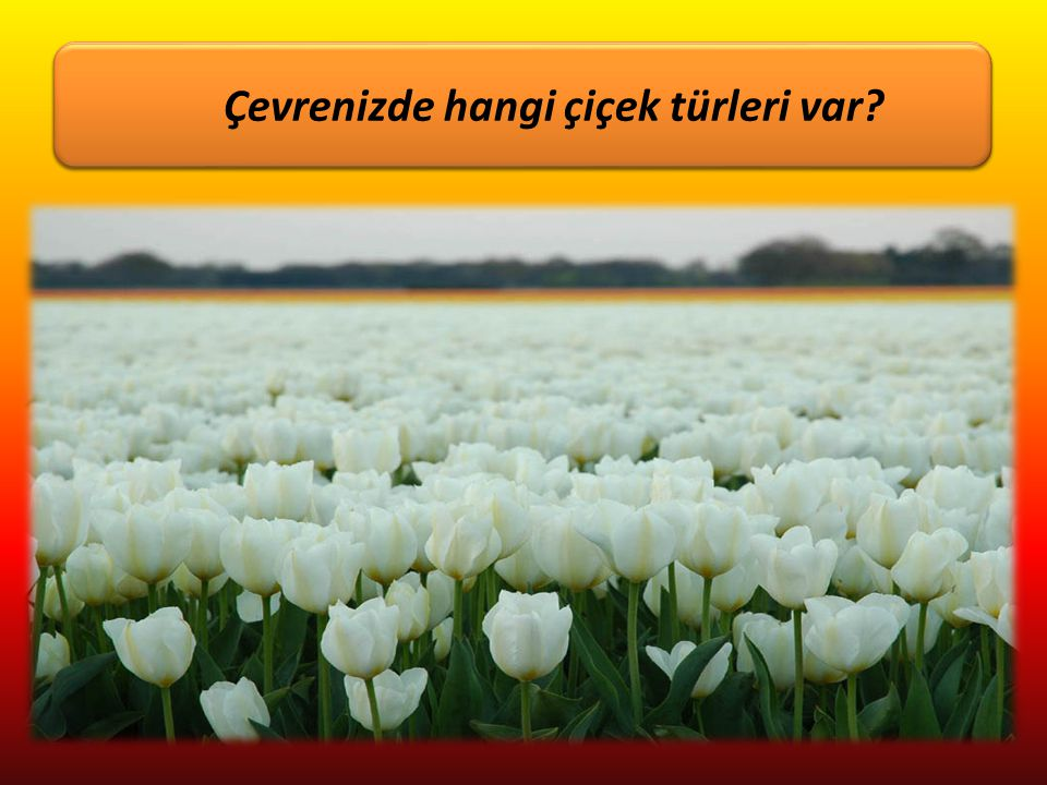 Çevrenizde hangi çiçek türleri var Çiçekleri sever misiniz