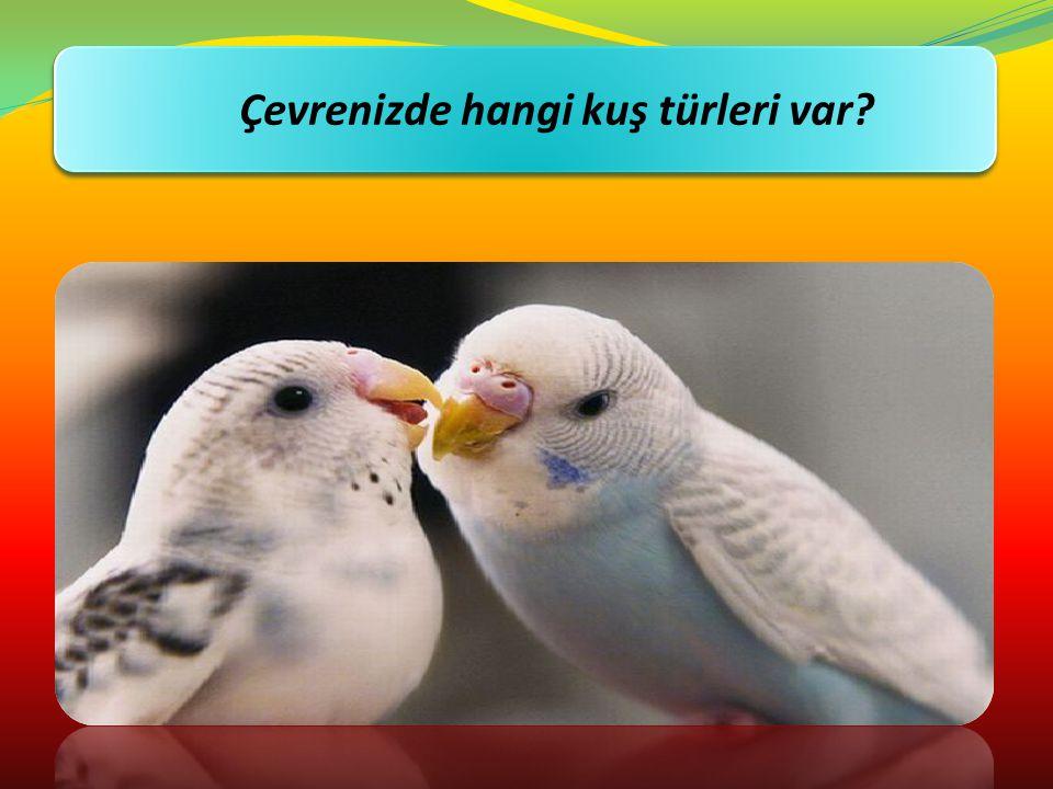 Çevrenizde hangi kuş türleri var