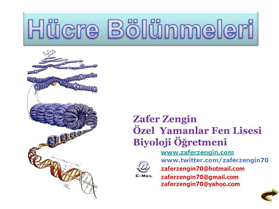 Hücre Bölünmeleri Zafer Zengin Özel Yamanlar Fen Lisesi Biyoloji Öğretmeni. www.zaferzengin.com.