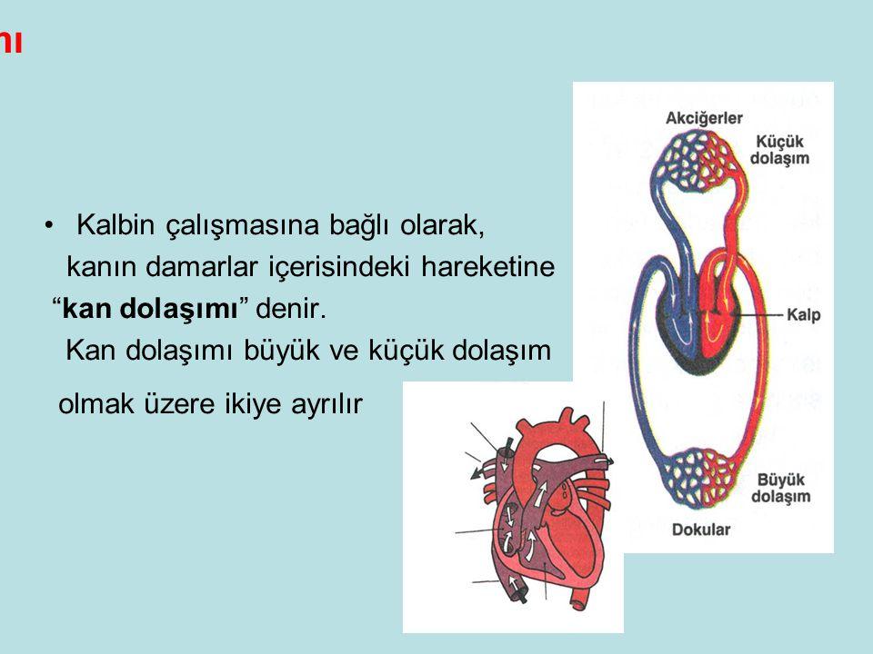 Kan Dolaşımı Kalbin çalışmasına bağlı olarak,