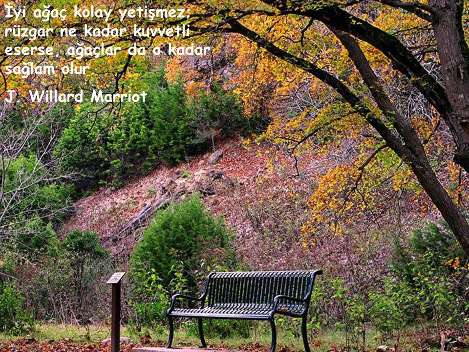 İyi ağaç kolay yetişmez; rüzgar ne kadar kuvvetli eserse, ağaçlar da o kadar sağlam olur.