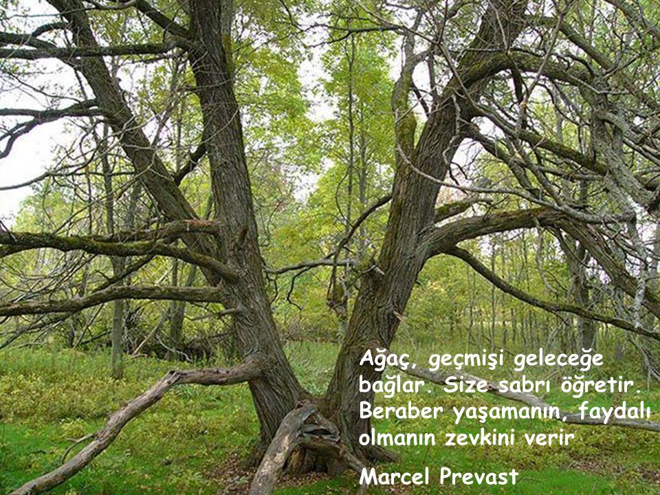 Ağaç, geçmişi geleceğe bağlar. Size sabrı öğretir