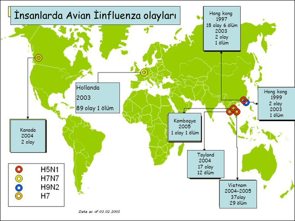 İnsanlarda Avian İinfluenza olayları