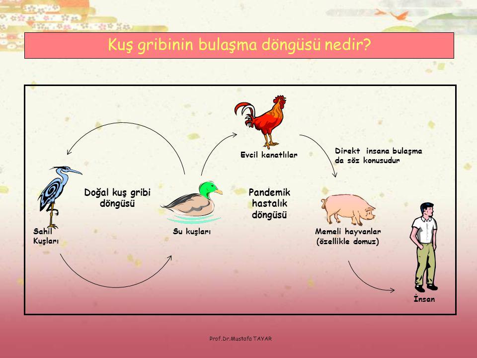 Pandemik hastalık döngüsü Doğal kuş gribi döngüsü