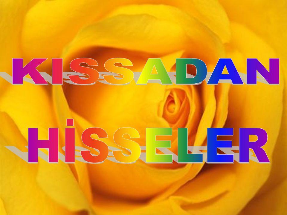 KISSADAN HİSSELER