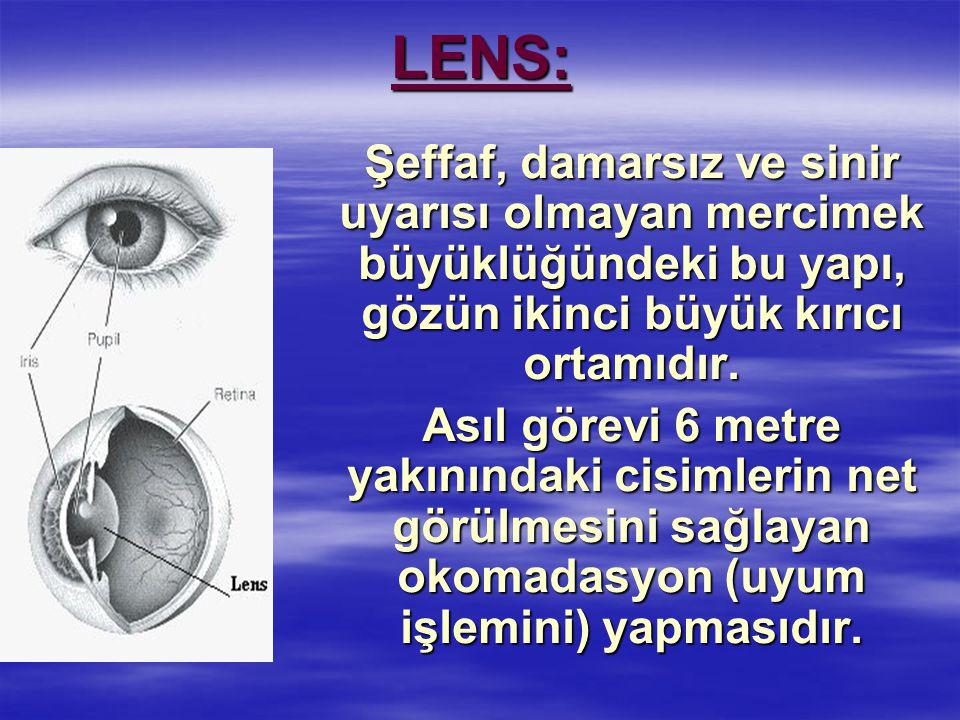 LENS: Şeffaf, damarsız ve sinir uyarısı olmayan mercimek büyüklüğündeki bu yapı, gözün ikinci büyük kırıcı ortamıdır.