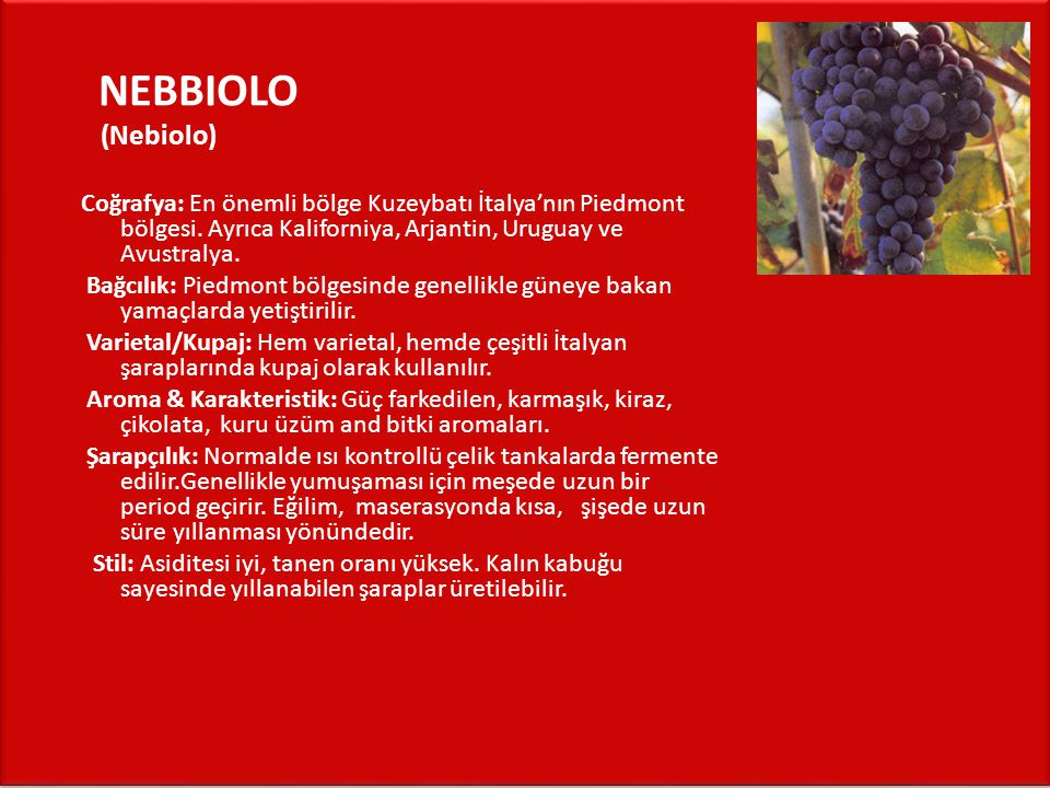 NEBBIOLO (Nebiolo) Coğrafya: En önemli bölge Kuzeybatı İtalya'nın Piedmont bölgesi. Ayrıca Kaliforniya, Arjantin, Uruguay ve Avustralya.
