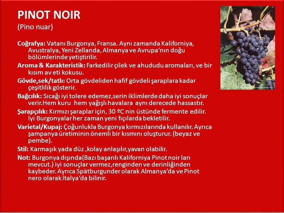 PINOT NOIR (Pino nuar)