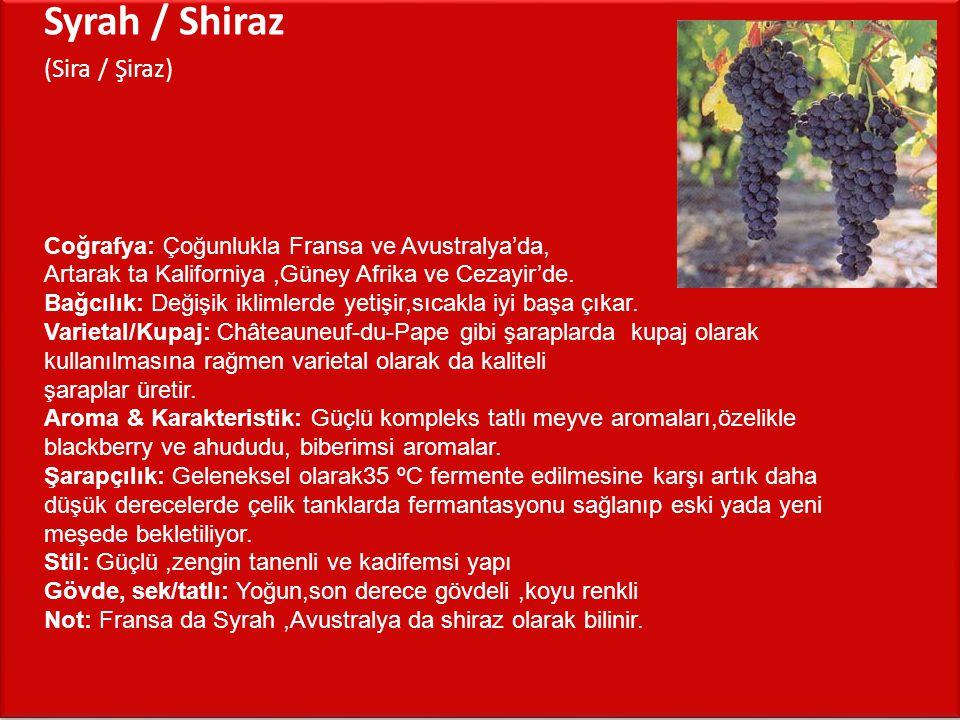 Syrah / Shiraz (Sira / Şiraz)