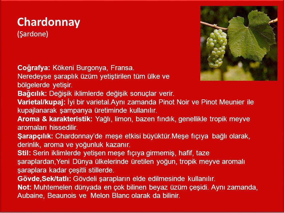 Chardonnay (Şardone) Coğrafya: Kökeni Burgonya, Fransa.