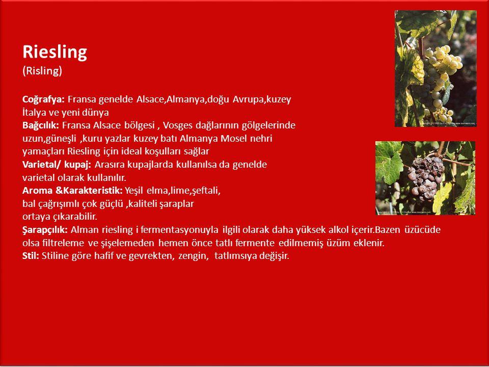 Riesling (Risling) Coğrafya: Fransa genelde Alsace,Almanya,doğu Avrupa,kuzey İtalya ve yeni dünya Bağcılık: Fransa Alsace bölgesi , Vosges dağlarının gölgelerinde uzun,güneşli ,kuru yazlar kuzey batı Almanya Mosel nehri yamaçları Riesling için ideal koşulları sağlar Varietal/ kupaj: Arasıra kupajlarda kullanılsa da genelde varietal olarak kullanılır.