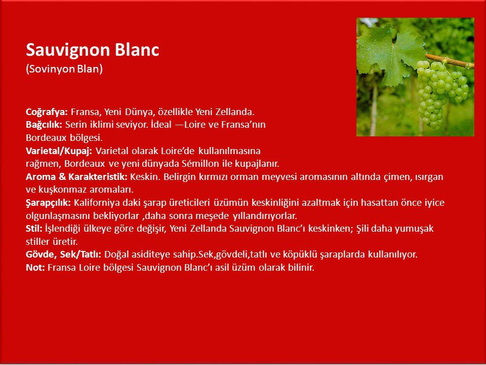 Sauvignon Blanc (Sovinyon Blan) Coğrafya: Fransa, Yeni Dünya, özellikle Yeni Zellanda.