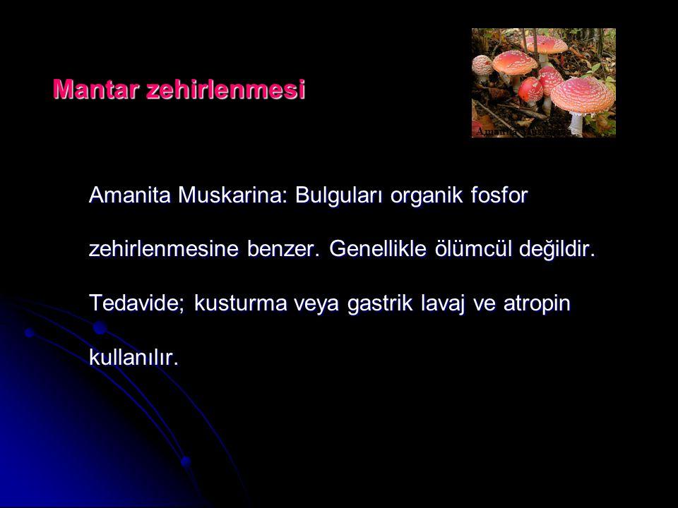 Mantar zehirlenmesi Amantia Muscarina.