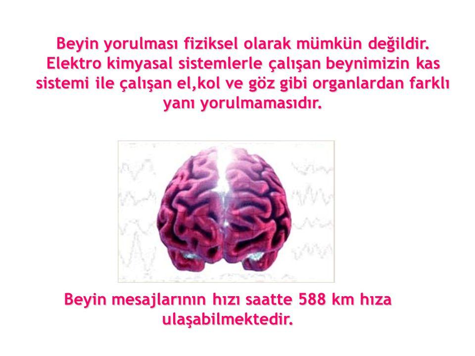 Beyin mesajlarının hızı saatte 588 km hıza ulaşabilmektedir.
