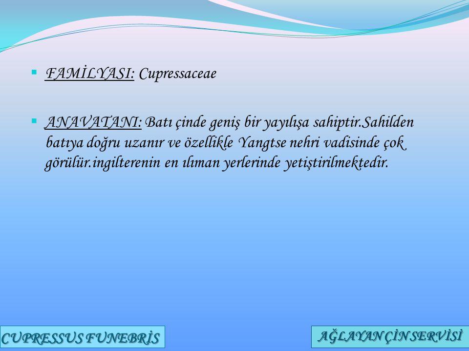 FAMİLYASI: Cupressaceae