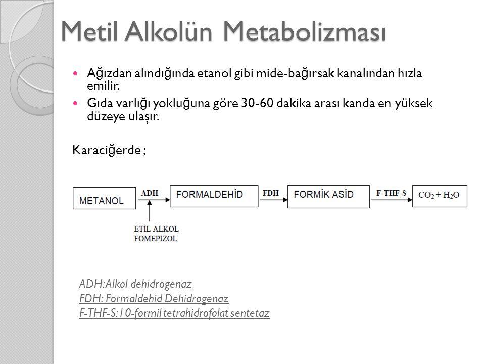 Metil Alkolün Metabolizması