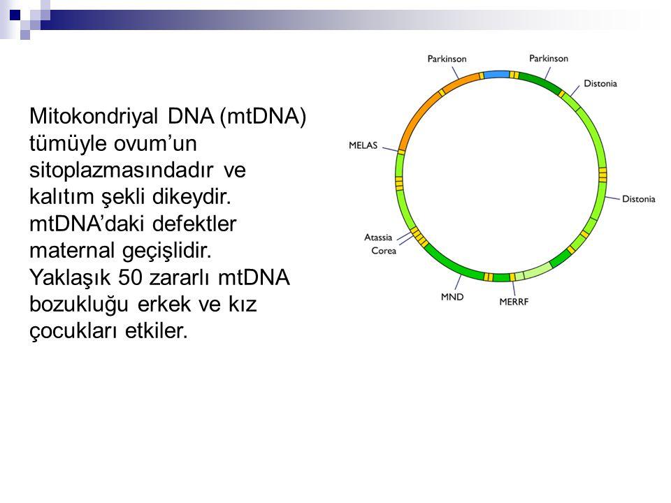 Mitokondriyal DNA (mtDNA) tümüyle ovum'un sitoplazmasındadır ve kalıtım şekli dikeydir. mtDNA'daki defektler maternal geçişlidir.