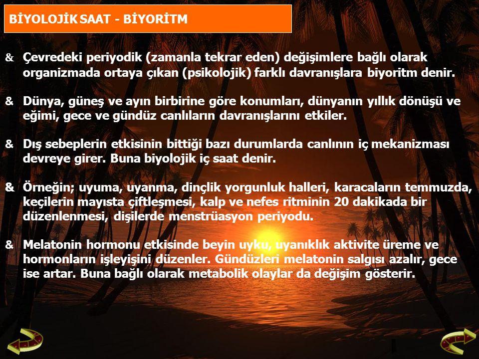 BİYOLOJİK SAAT - BİYORİTM