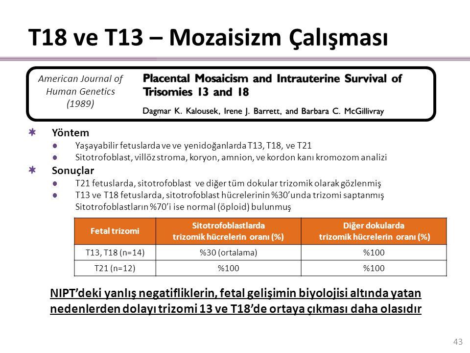 T18 ve T13 – Mozaisizm Çalışması