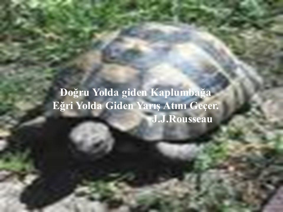 Doğru Yolda giden Kaplumbağa Eğri Yolda Giden Yarış Atını Geçer.