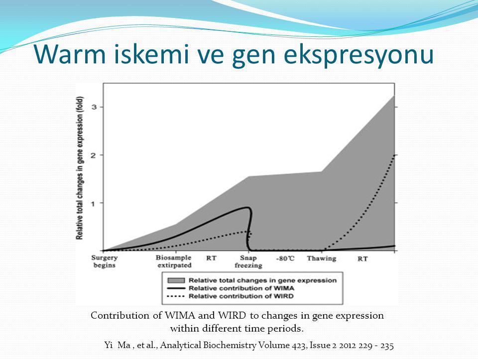 Warm iskemi ve gen ekspresyonu