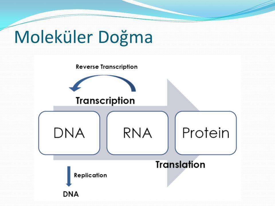 Moleküler Doğma