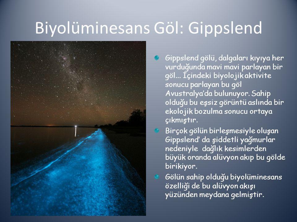 Biyolüminesans Göl: Gippslend
