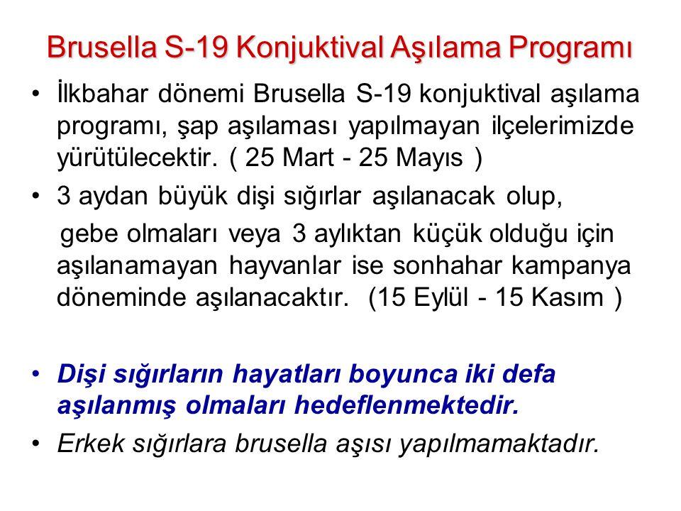 Brusella S-19 Konjuktival Aşılama Programı