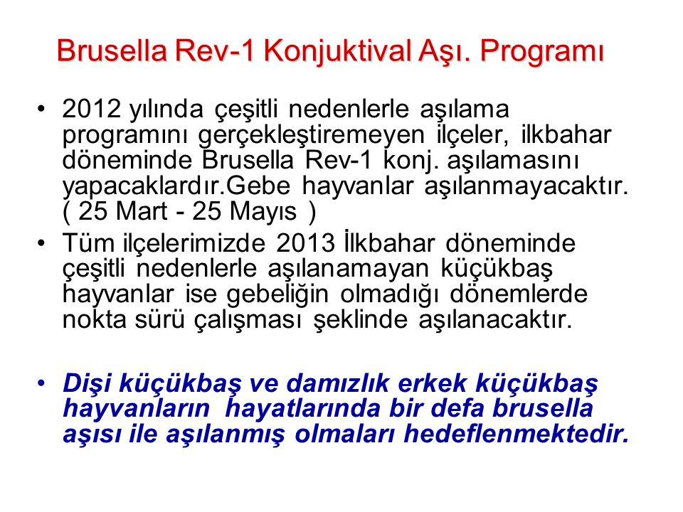 Brusella Rev-1 Konjuktival Aşı. Programı