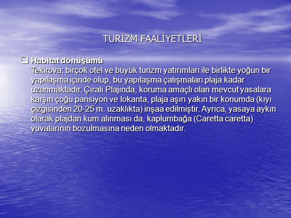 TURİZM FAALİYETLERİ