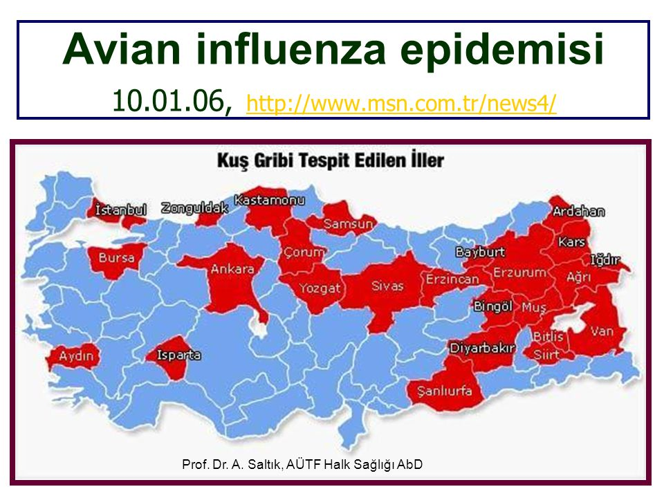 Avian influenza epidemisi 10.01.06, http://www.msn.com.tr/news4/