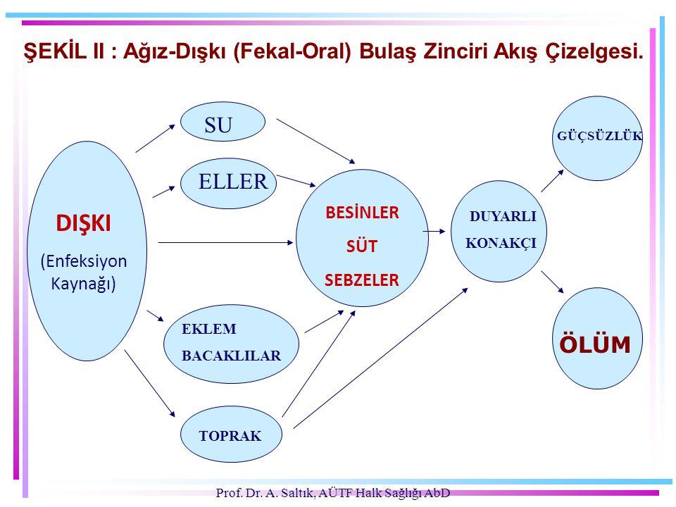 ŞEKİL II : Ağız-Dışkı (Fekal-Oral) Bulaş Zinciri Akış Çizelgesi.