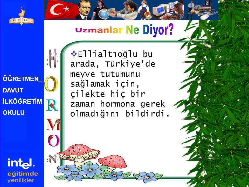 Uzmanlar Ne Diyor Ellialtıoğlu bu arada, Türkiye de meyve tutumunu sağlamak için, çilekte hiç bir zaman hormona gerek olmadığını bildirdi.